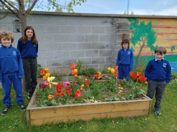 OLG Whole School Bulb Project